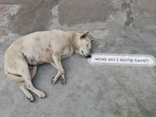 India: dog